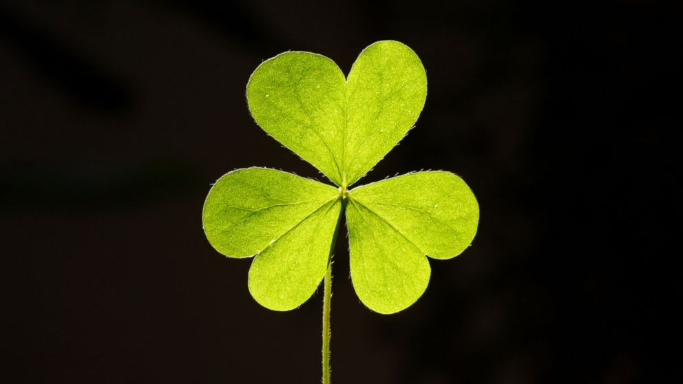 Why You Shouldnt Use The Four Leaf Clover Emoji Today Abc News