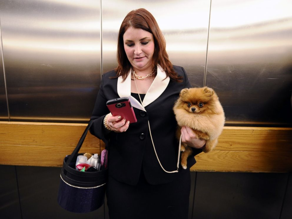 PHOTO:Caitlin Weinert holds her Pomeranian named Havoc in one hand while using her smartphone in an elevator leaving the 140 Annual Westminster Kennel Dog Show held at Pier 94 in New York, Feb. 15, 2016.