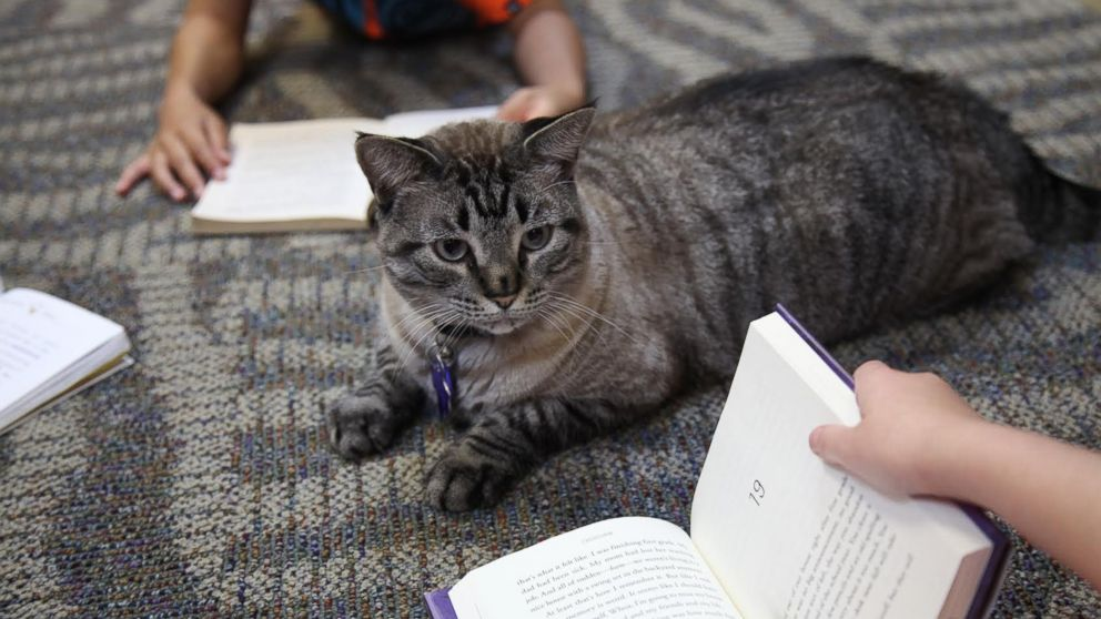 Browser the cat sits among a group of children being read to in the city's public library, June 30, 2016, in White Settlement, Texas.