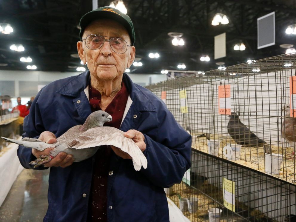 PHOTO: Richard Brooks, 94, holds a pigeon at the National Pigeon Associations 93rd annual Grand National Pigeon Show in Ontario, Calif., Jan. 29, 2015.