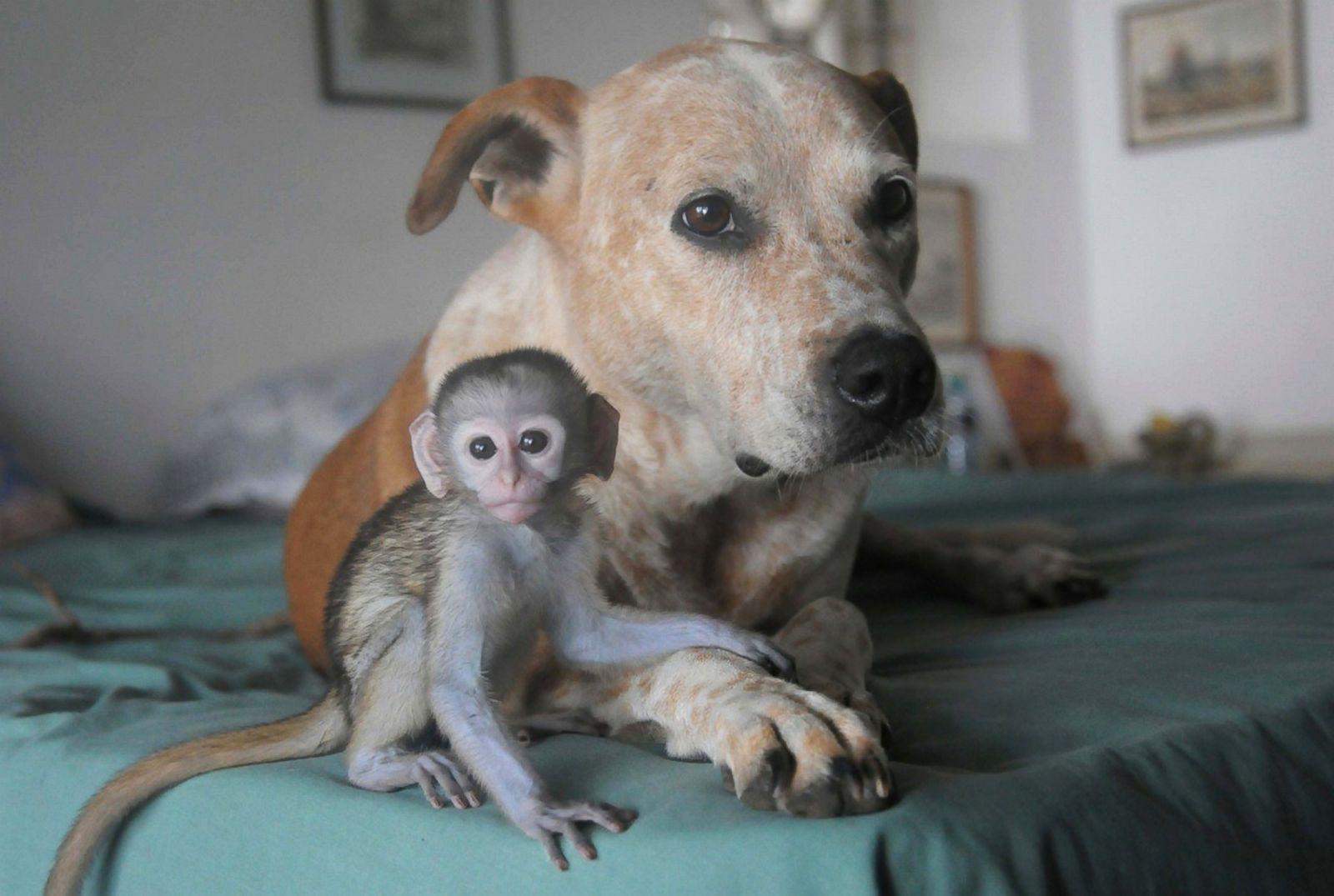 Animal Kingdoms Odd Couples Photos Abc News