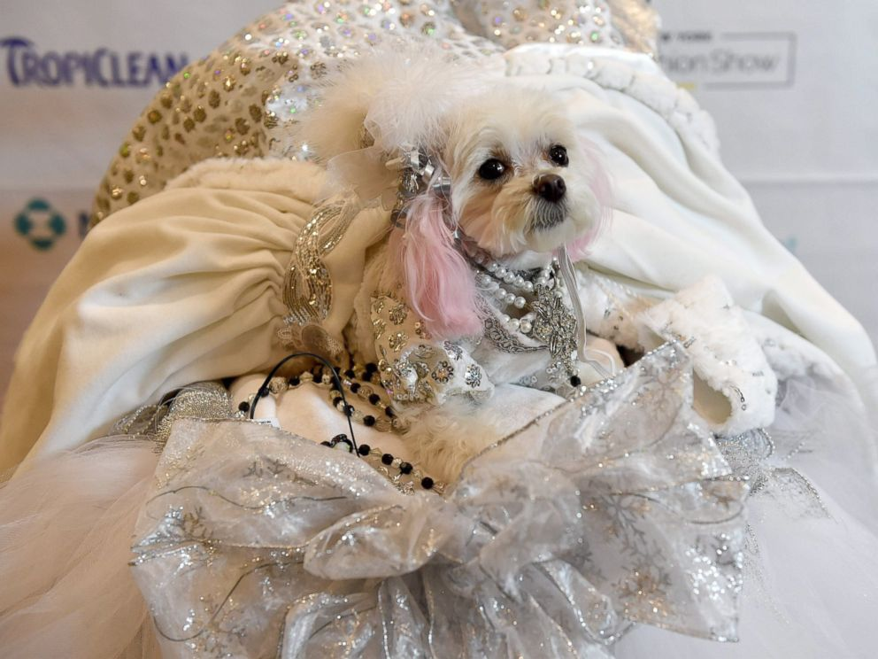 PHOTO: ZZ, representing Russia, is a contestant in the World Fashion Presents segment of the 14th Annual New York Pet Fashion Show, Feb. 9, 2017.