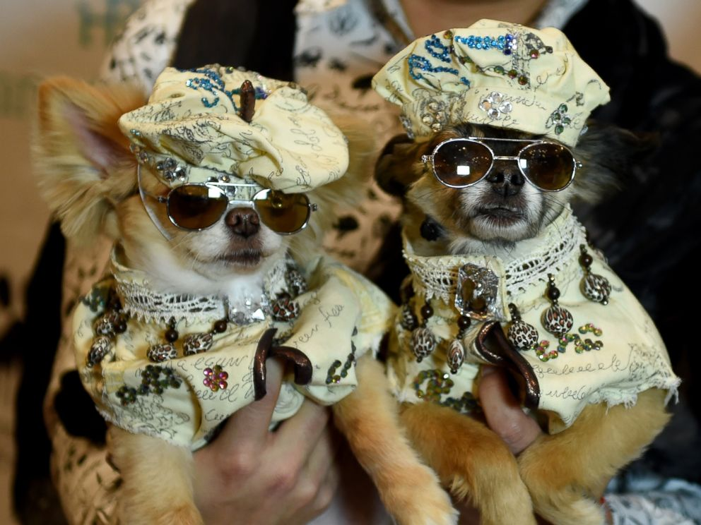 PHOTO: Dogs pose during the 14th Annual New York Pet Fashion Show, Feb. 9, 2017.