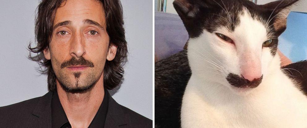 Stache the Cat Looks L... Adrien Brody Instagram