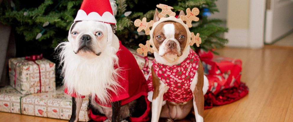 PHOTO: The American Pet Products Association predicts people will shell out more money than ever before on their four-legged and feathered friends this holiday season.