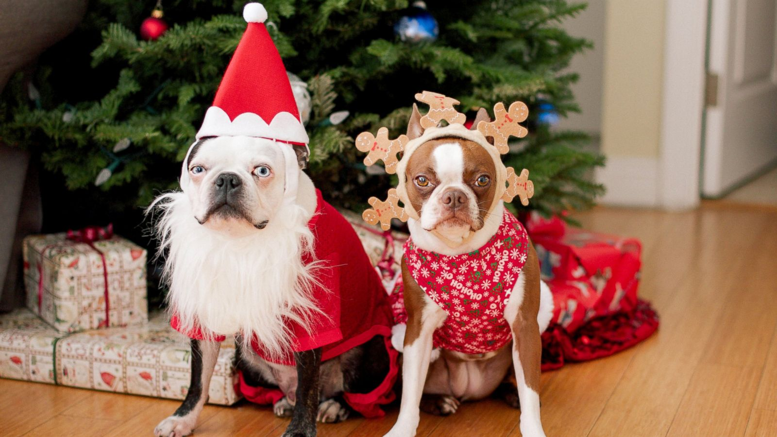 Christmas Isn't Just for People, It's for Pets, Too - ABC News