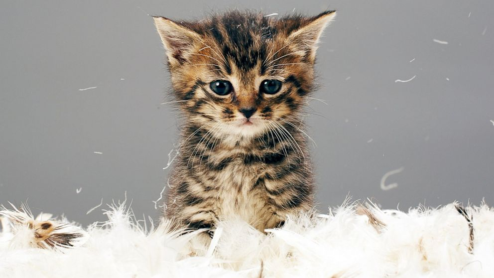Hello, Kitty: Internet Cat Video Festival Continues to ...