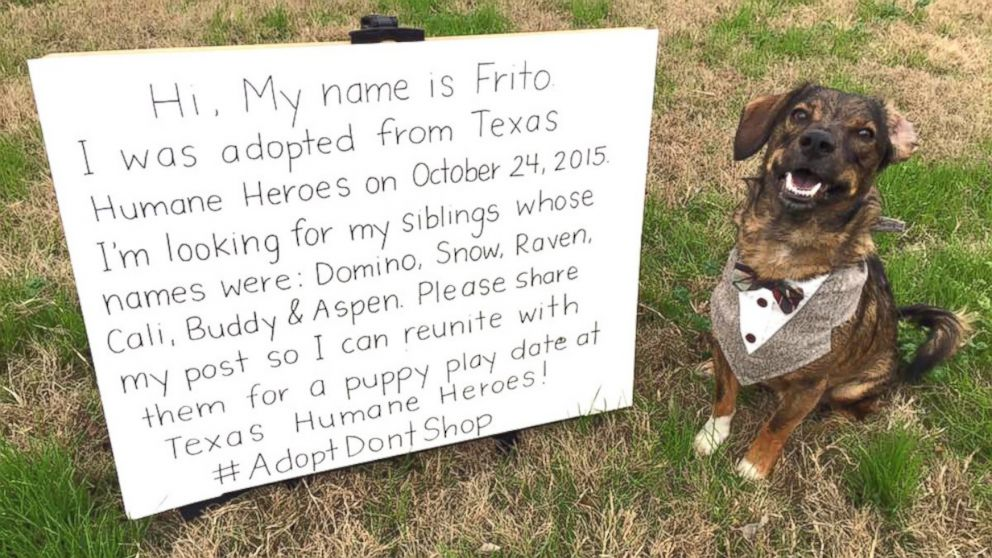 Rescue Dog Named Frito to Reunite With Long Lost Siblings