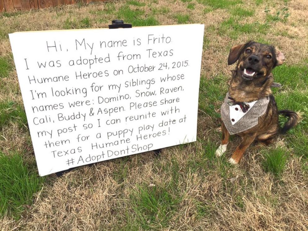 PHOTO: Adopted dog, Frito, to be reunited with all his biological siblings on Feb. 18,, 2017.