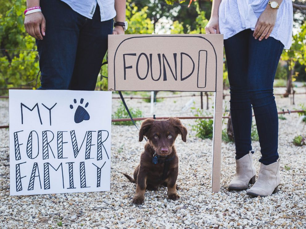 PHOTO: Clarissa Quintana and Ivan Figueroa celebrated their new recue puppy, Owen, with these cute photos.