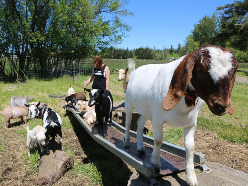 PHOTO: Lainey Morse on her farm in Oregon, where she came up with the idea for goat yoga.