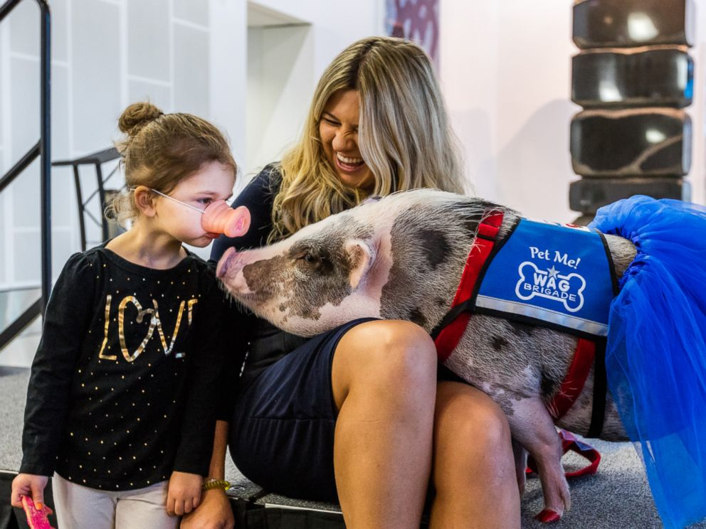 PHOTO: LiLou is the first known airport therapy pig in the U.S., according to the San Francisco International Airport. She was welcomed into the airports Wag Brigade on Dec. 5, 2016.