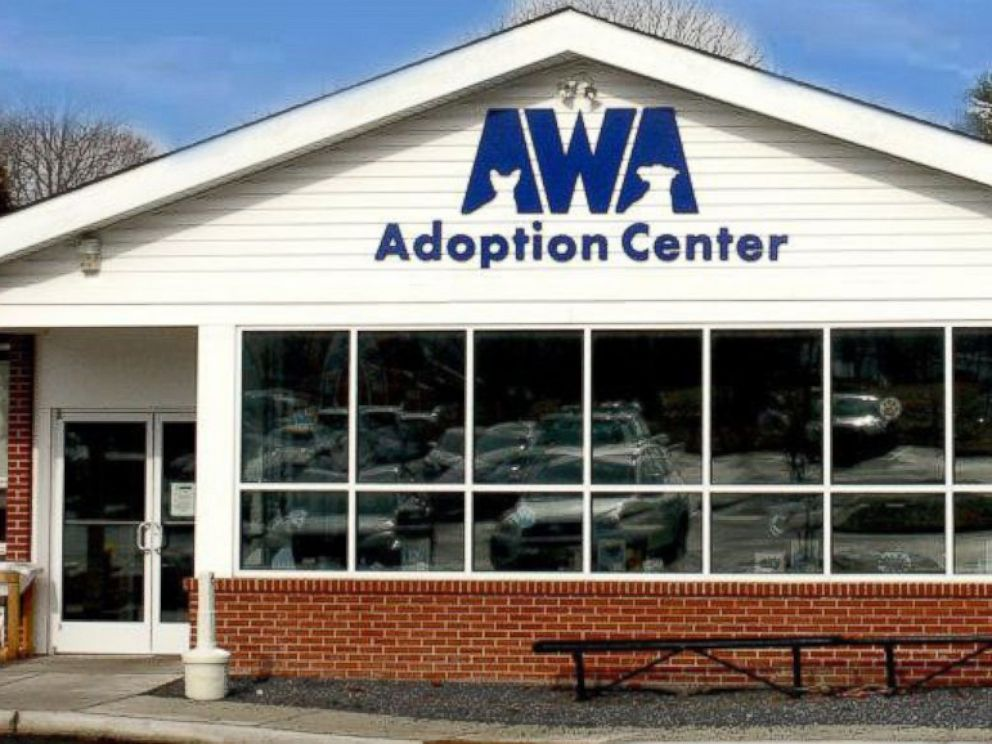 PHOTO: The Animal Welfare Association in Voorhees, New Jersey, have received over 350 offers from people across the country who want to adopt Burrito--some as far as Canada.