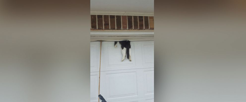 Cat Caught in Garage Door Saved by Deputy - ABC News