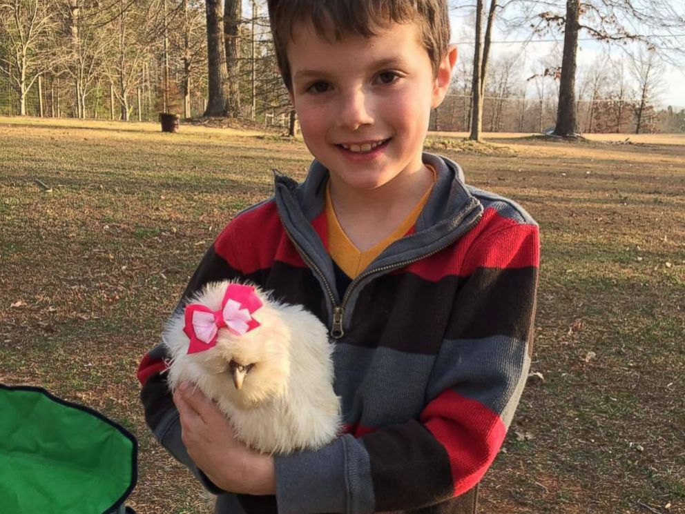 PHOTO: Finn Proctor, 7, adopted Darla, his therapy chicken that is helping to educate his community about humane treatment of animals.