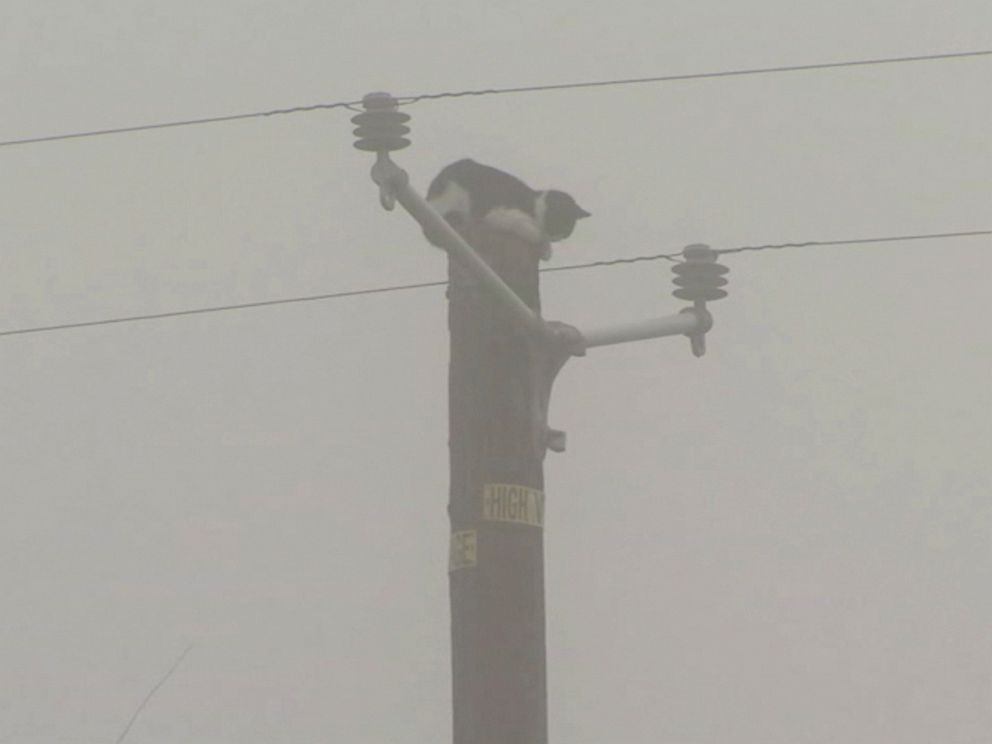 PHOTO: On Nov. 22, 2016, two linemen with the Pacific Gas and Electric Company rescued a cat that had been stuck atop a power pole in Fresno, California, for a few days, according to a PG&E spokesman.