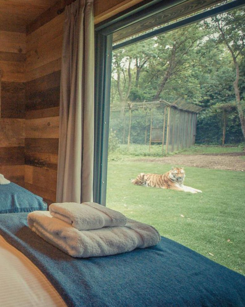 Photo The New Tiger Lodge On Port Lympne Reserve In Kent