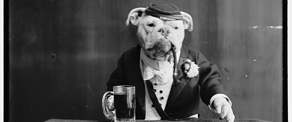 0ef6692ee0e Rare Portraits of Fancy Bulldogs
