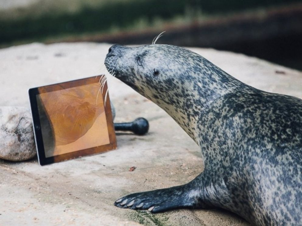 PHOTO: Seals Sija and Babyface Video Chat each other with Seal Time to keep in touch after being separated.