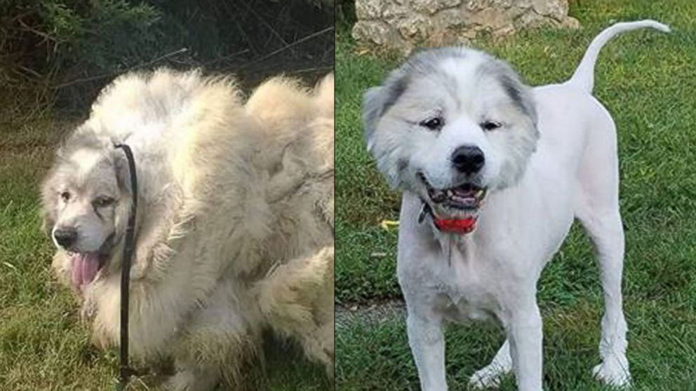 Pyrenees Dog Rescue California