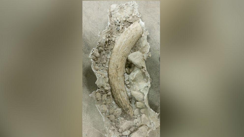 Man in Idaho Finds Rare Mammoth Tusk in His Backyard Dating