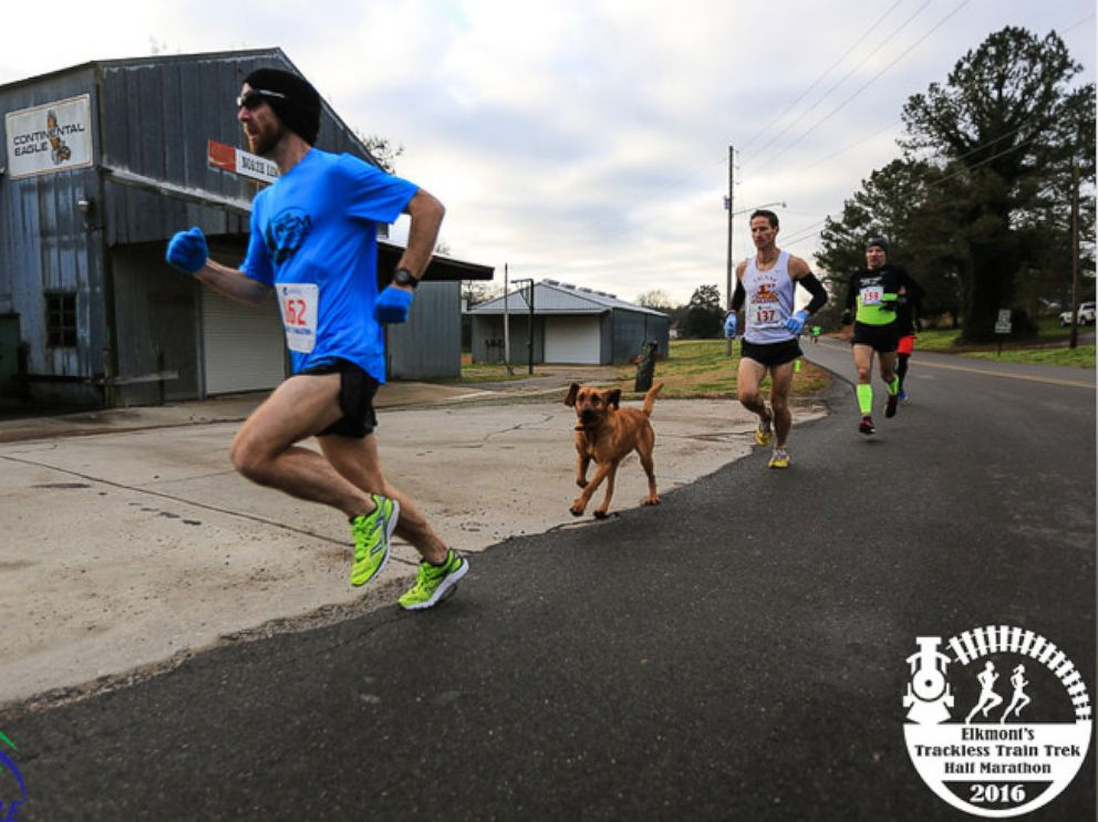 PHOTO: Ludivine the dog raced to a seventh-place finish in a half marathon in Elkmont, Alabama.