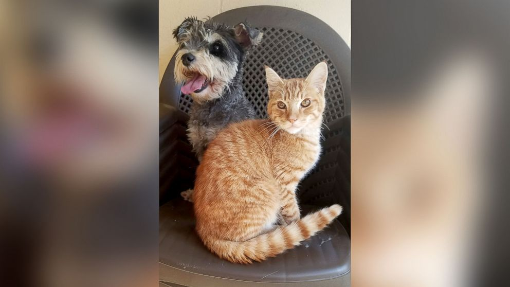 "The Chula Vista Animal Care Facility in California said a cat named Romeo and a dog named Juliet who came the their shelter on Sept. 29, 2016, are ""an inseparable pair."""