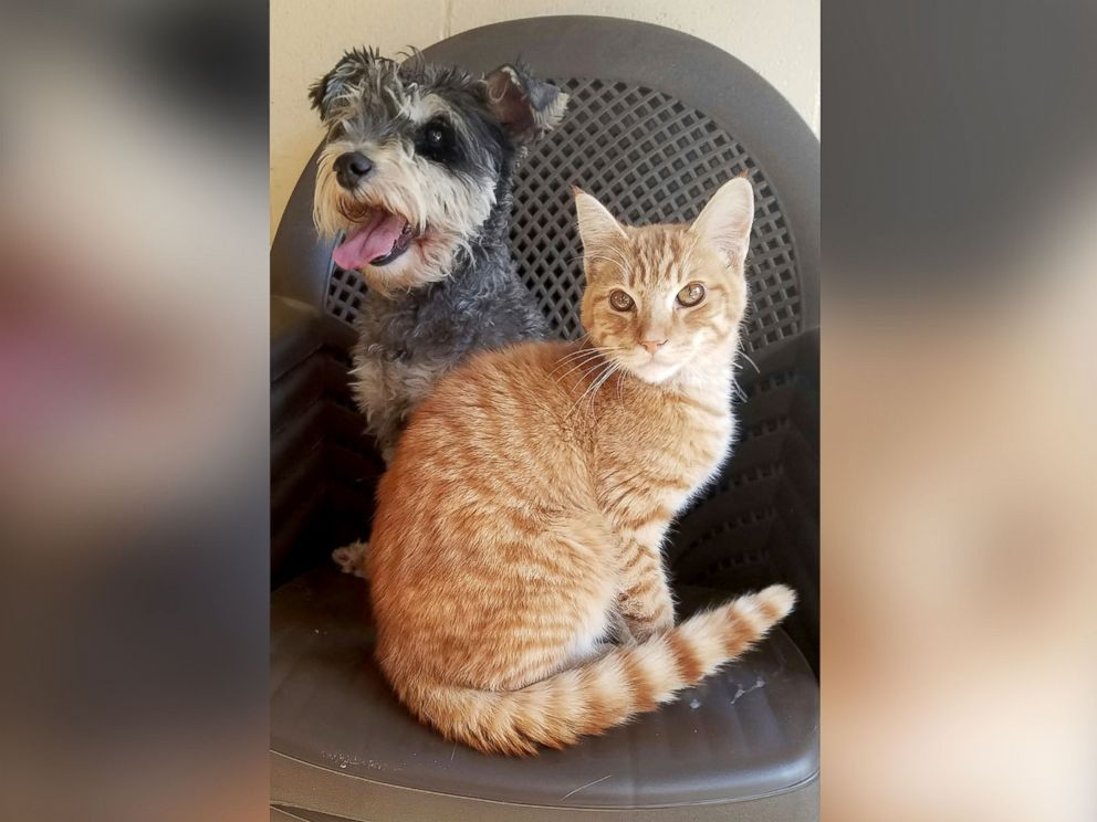 Meet Romeo the Cat and Juliet the Dog, Star-Crossed Lovers at a