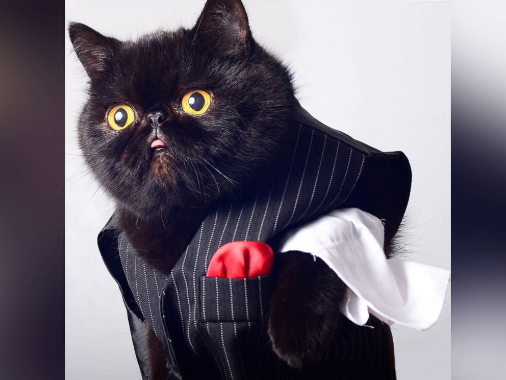 PHOTO Willow the black cat is rocking Halloween with daily Instagram costumes. & Black Cat Named Willow Is Rocking Halloween With Daily Instagram ...