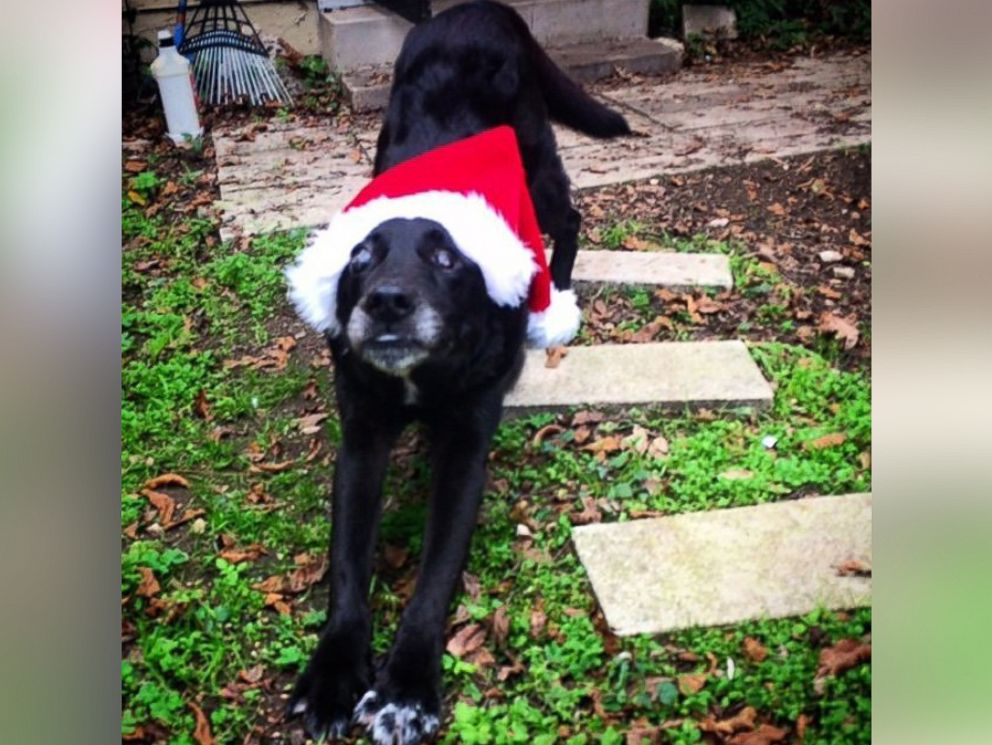 PHOTO: This is Blackies first Christmas with a real family.