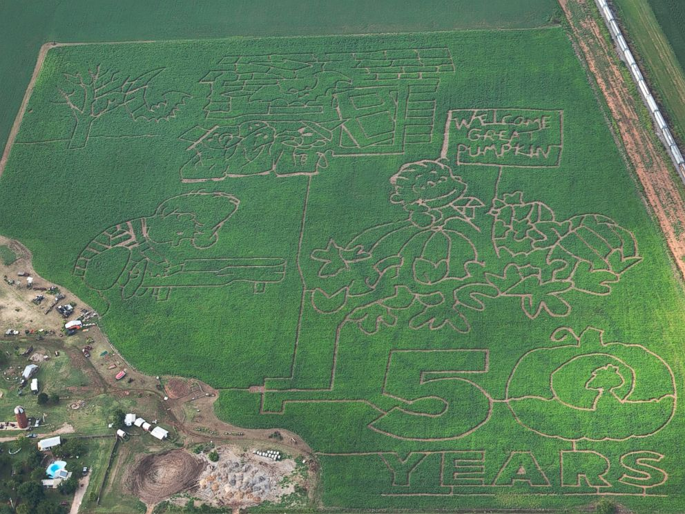 PHOTO: More than 90 farms nationwide are celebrating the Peanuts 50th anniversary of Its the Great Pumpkin, Charlie Brown.