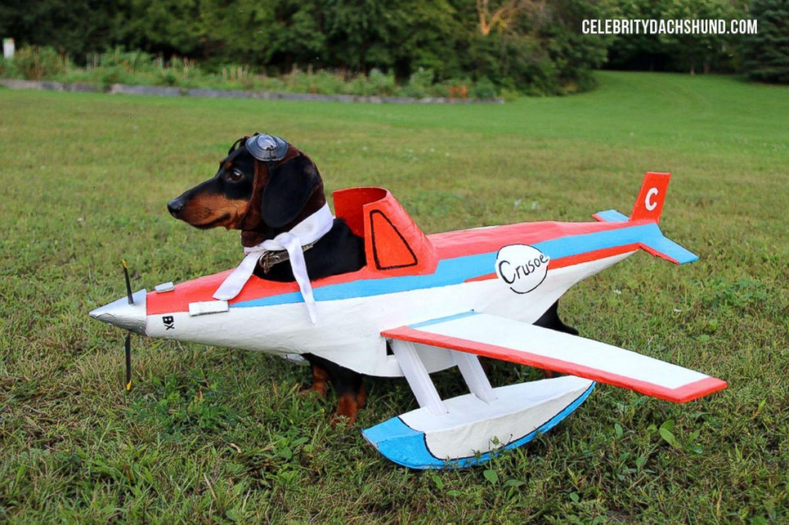 Weiner Dog Halloween Costumes.10 Amazing Pet Halloween Costumes Photos Abc News
