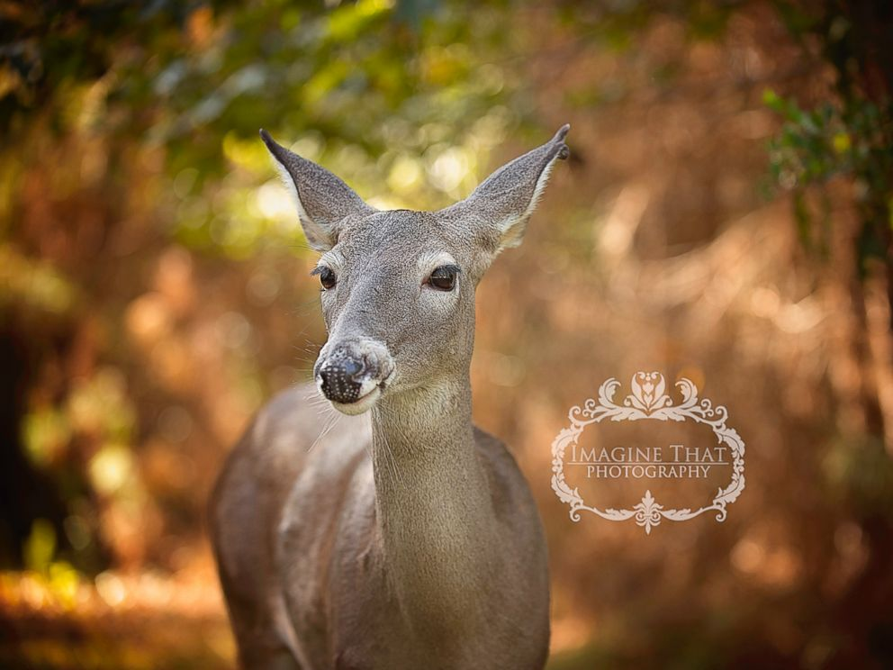 PHOTO: Maggie the deer photobombed one-month-old Connors shoot in Sam Houston State Park in Louisiana.