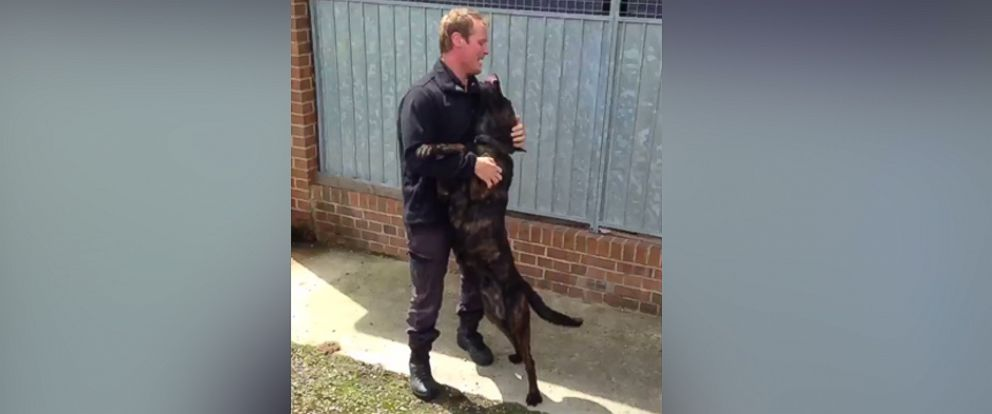PHOTO: Dutch the dog cannot control his excitement during his reunion with Police Officer Constable Marc Richardson, after spending two weeks apart.