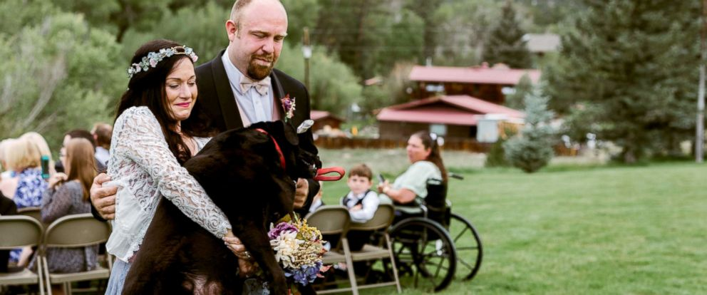 PHOTO: On Sept. 1, maid of honor Katie Lloyd carried Charlie Bear, 15, her sisters dying dog, down the aisle during her wedding in Buena Vista, Colorado.