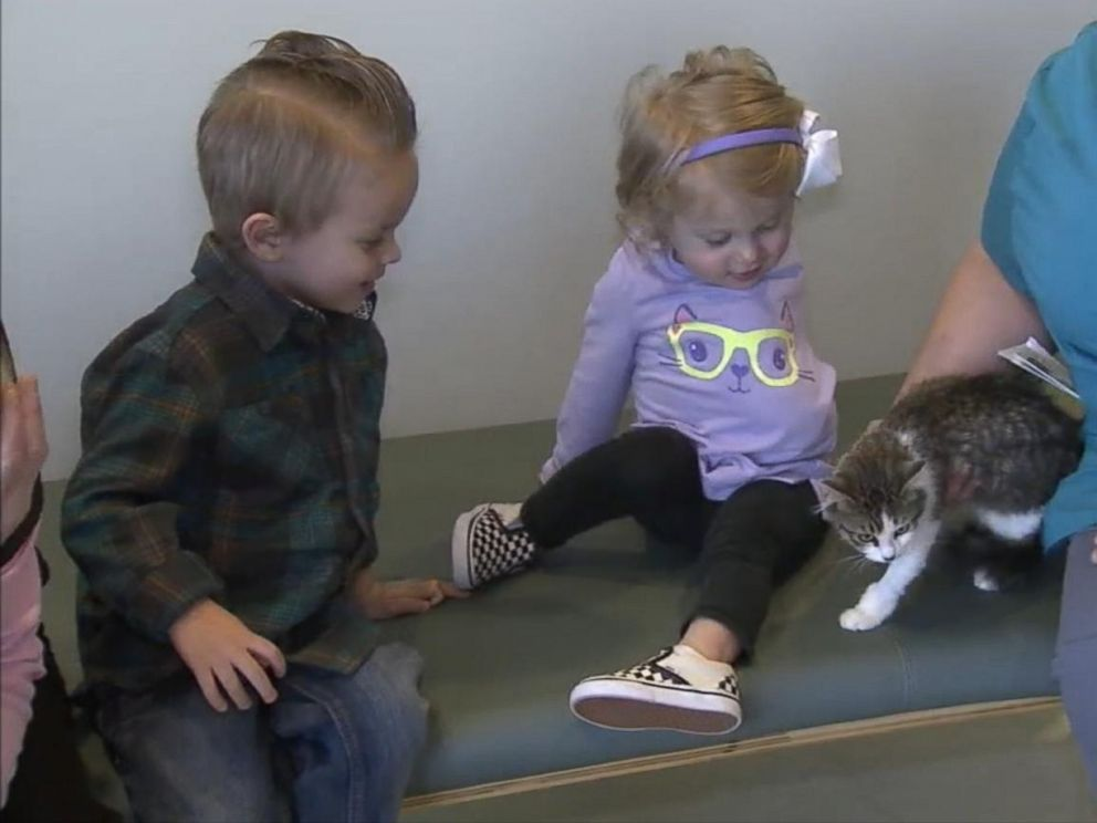 PHOTO:Orange County, California, parents Matt and Simone Tipton adopted a three-legged cat named Holly on Dec. 30, 2015, for their 2-year-old daughter Scarlette, who lost an arm in 2014.