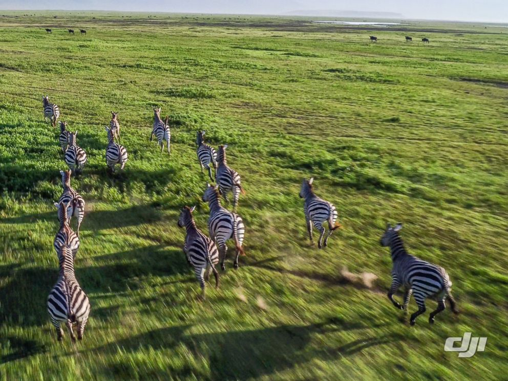 PHOTO: A drone camera captures the stunning scenes of Tanzanias Ngorongoro Crater.