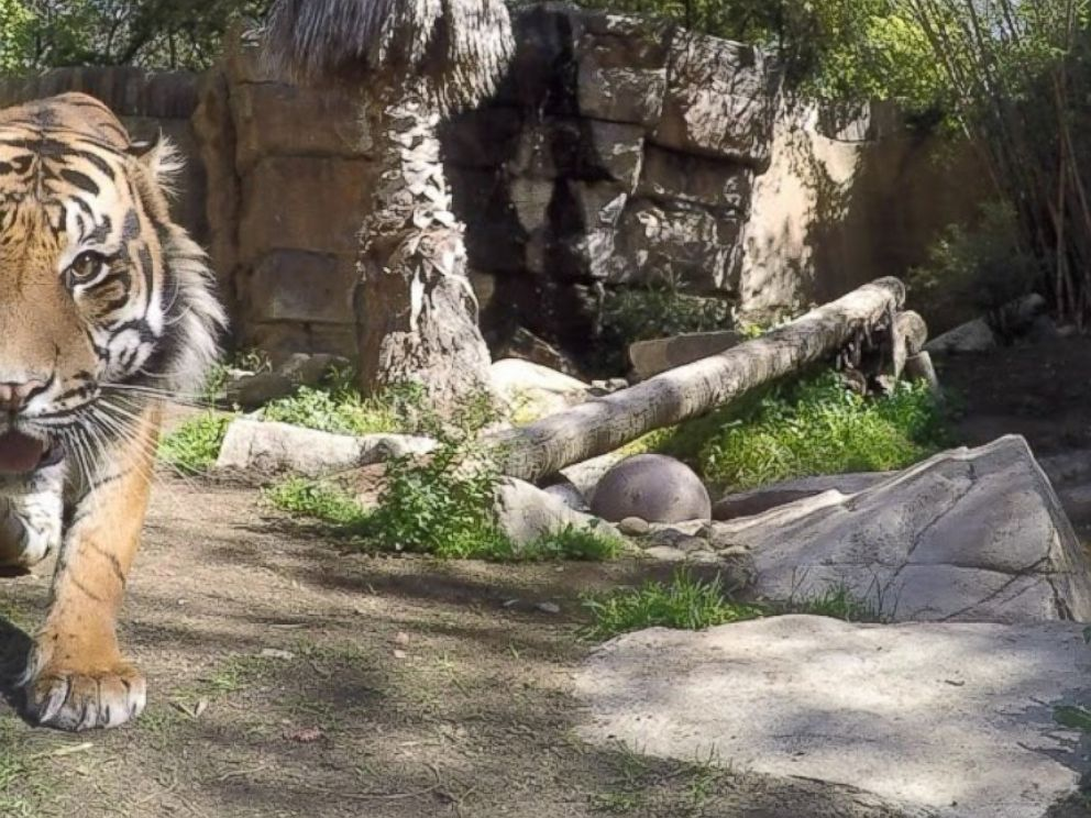 PHOTO: Google has teamed up with the Los Angeles Zoo and set-up high-tech cameras in animal enclosures all over the zoo, so animals can takes photos of themselves.