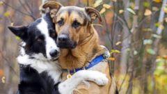Dog Barks When Hugging