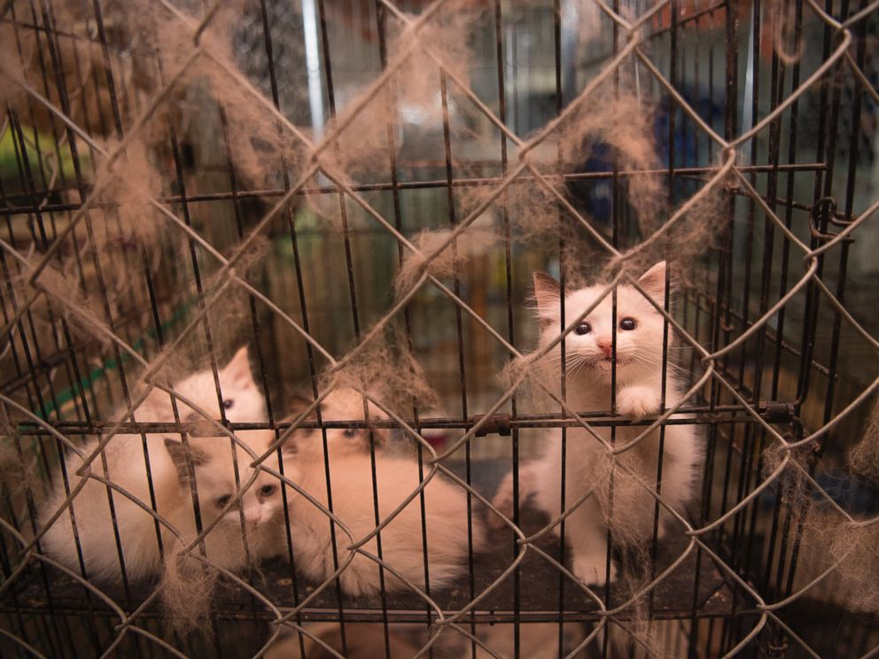 128 Animals Rescued From Suspected Puppy Mill in North Carolina