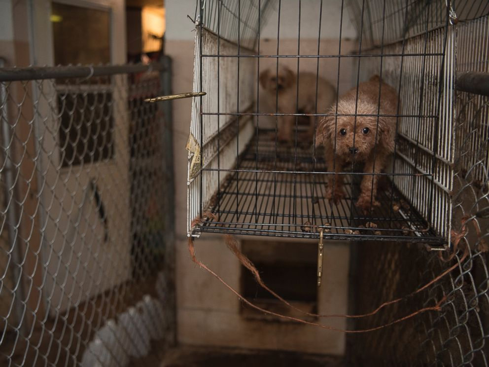 128 Animals Rescued From Suspected Puppy Mill In North