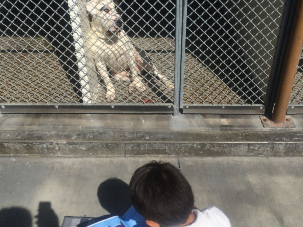 PHOTO:Jacob began reading to the shelter dogs 6 months ago, after his aunt suggested that he helped her volunteer.