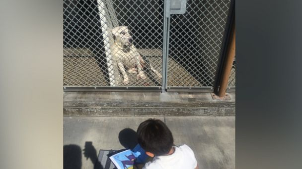 Jacob began reading to the shelter dogs 6 months ago, after his aunt suggested that he helped her volunteer.