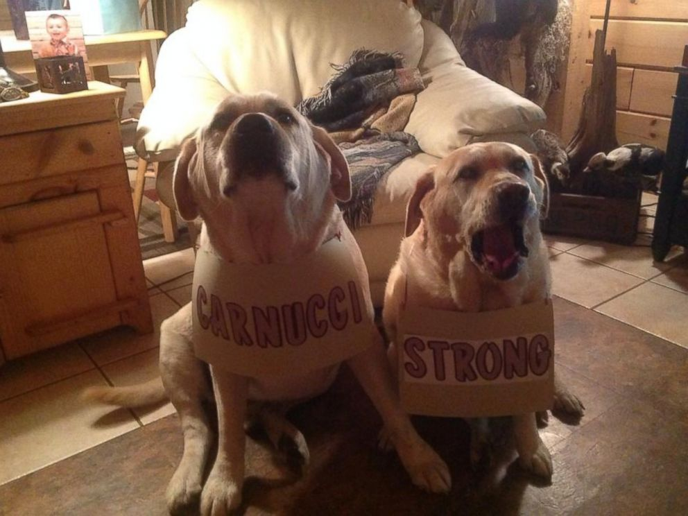 PHOTO: Even dogs got in on the Carnucci Strong campaign.