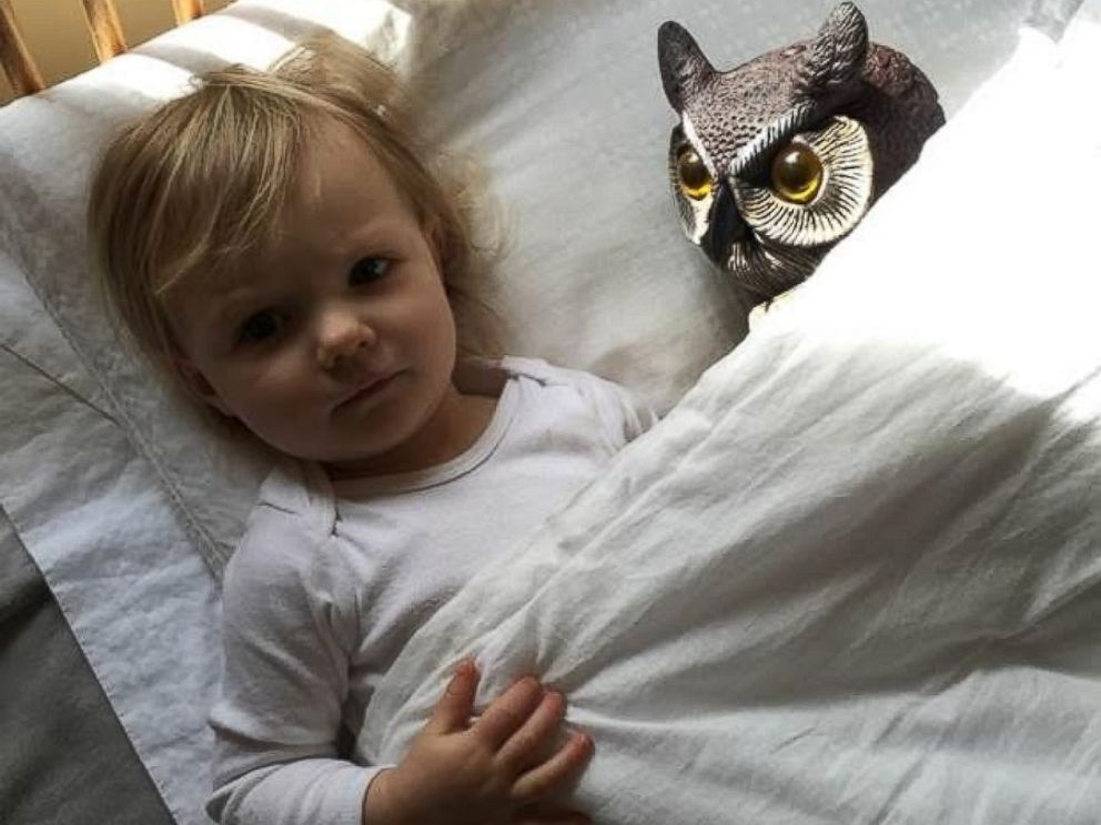 PHOTO:A little girl from the Boston area has become infatuated with an owl lawn ornament.
