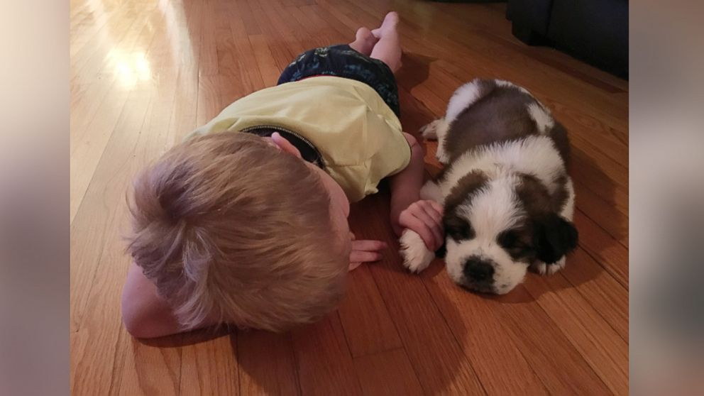 Lincoln Ball was gifted a puppy after his doctor discovered he was severely allergic to outdoor allergens.