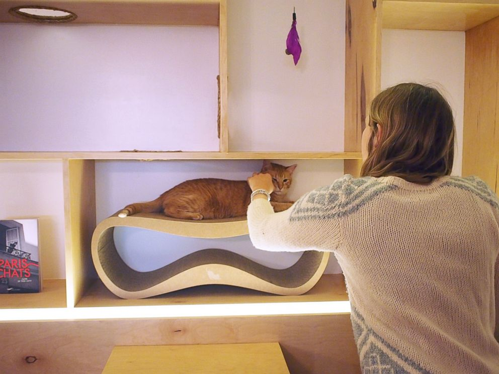 PHOTO: Guests can visit Meow Parlour in Soho, New York, by appointment only.