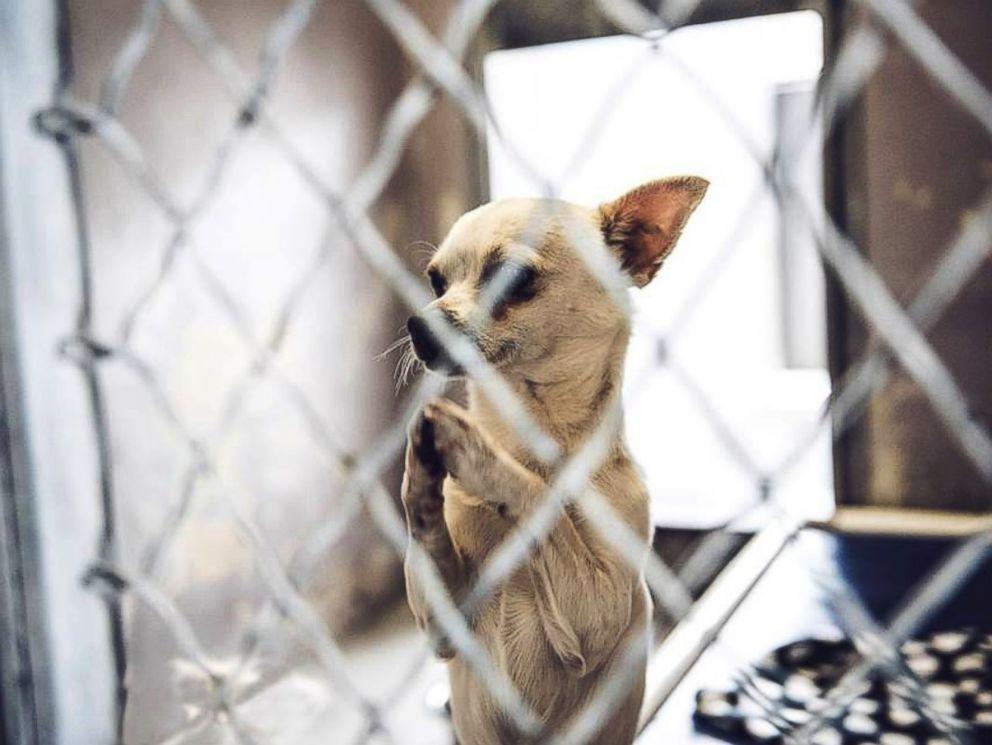 Dog Adoption Baldwin Park