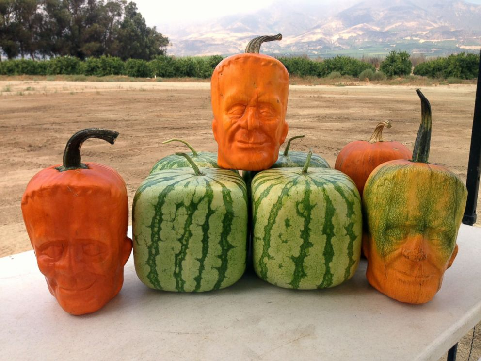 PHOTO: California farm owner Tony Dighera grows organic pumpkins that bear an uncanny resemblance to Frankenstein.