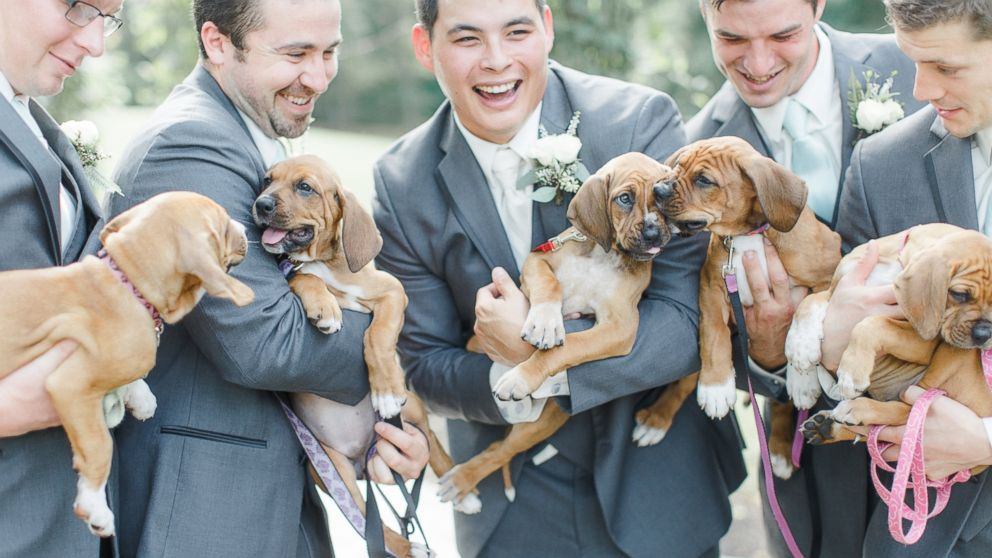 Puppies add a paw-dorable touch to Pennsylvania couple's magical wedding.